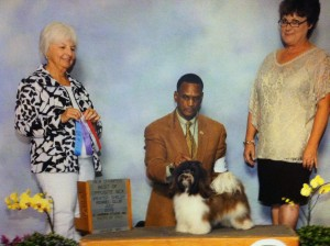 AKC CH Revistio's KitKat N Kaboodle at Hinz