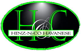 Hinz N Co Havanese