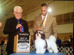 AKC CH Honor's Cross Town Lady – Libby